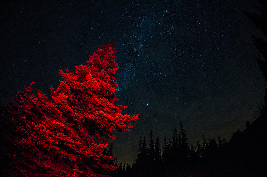 Mt. Rainier National Park Photograph - The Red Tree On A Starry Night by Brian Xavier