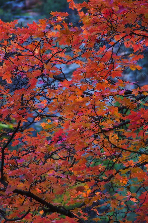 Fall Photograph - The Reds Of Autumn  by Saija  Lehtonen