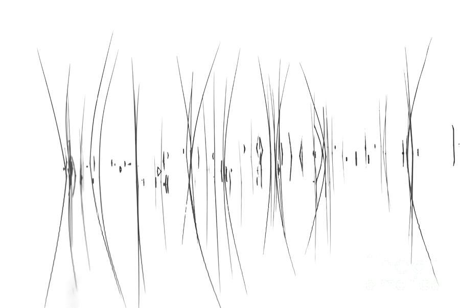 Tiny Marsh Photograph - The Reeds by Andrea Kollo