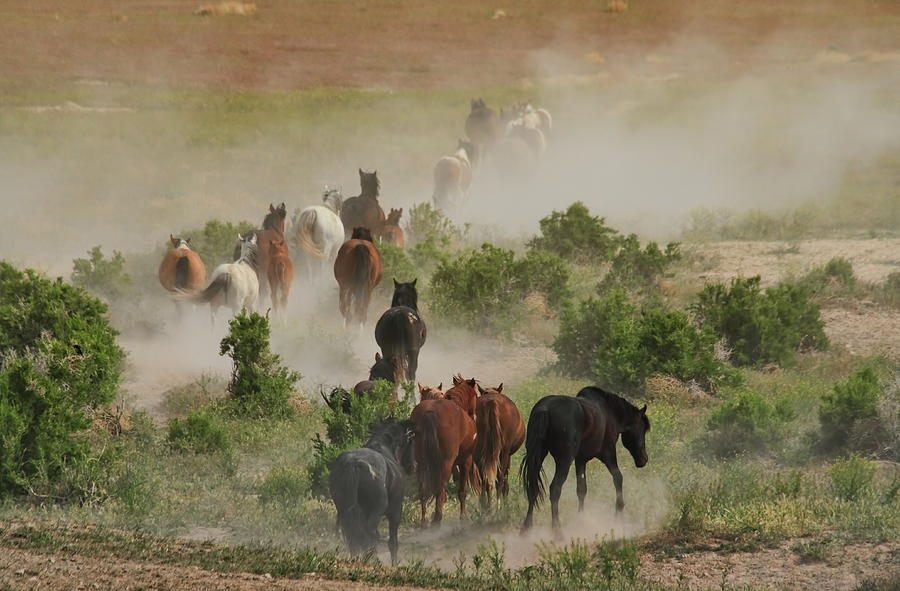 Horse Photograph - The Retreat by Gene Praag