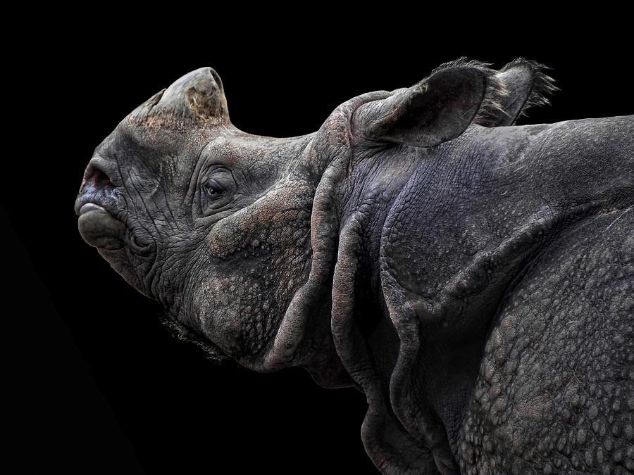 The Rhino Photograph