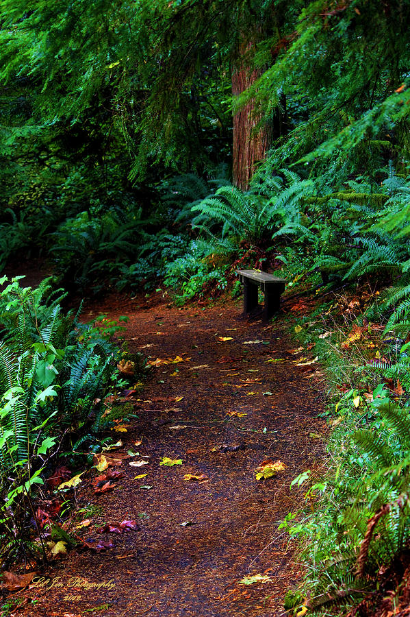 Forest Photograph - The Right Path by Jeanette C Landstrom