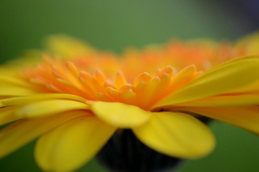 Flower Photograph - The Right Path by Melanie Moraga