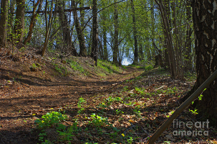 Nature Photograph - The Road In Spring Forest by