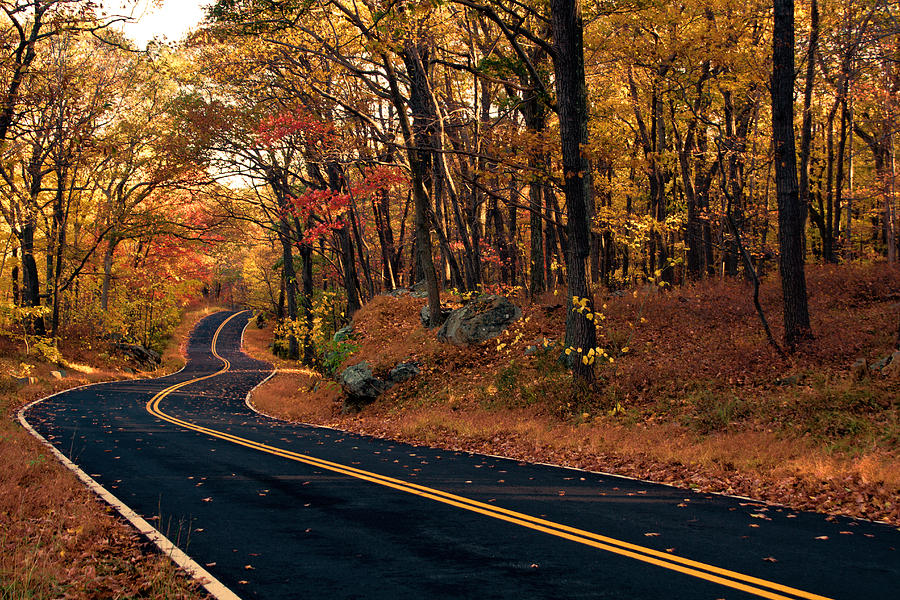 Road Photograph - The Road Into Autumn by Zev Steinhardt