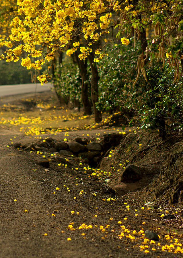 Trees Photograph - The Road Not Taken by Ramon Fernandez