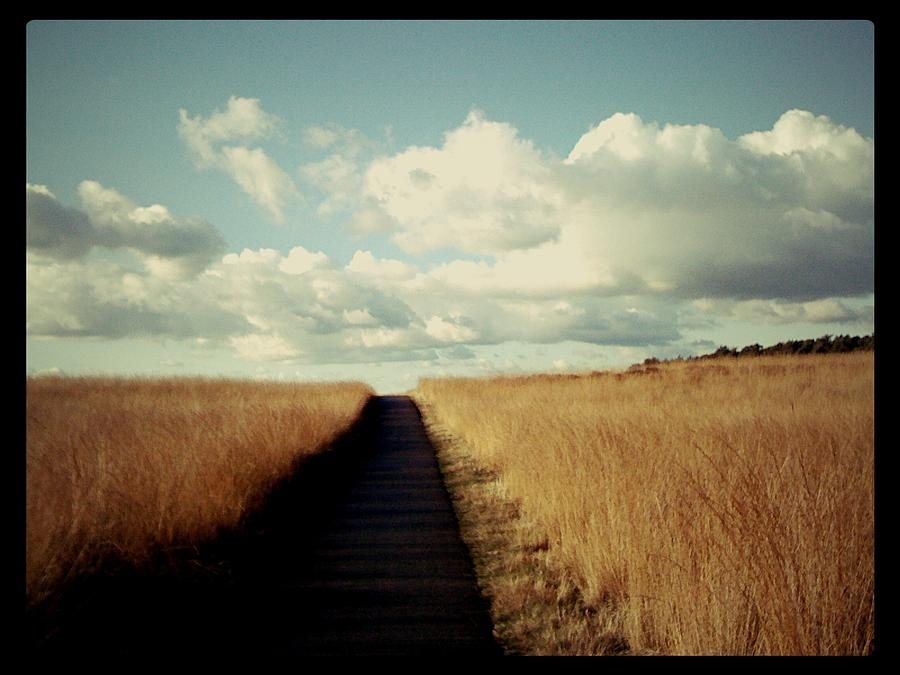 Road Photograph - The Road Rarely Taken by Beril Sirmacek