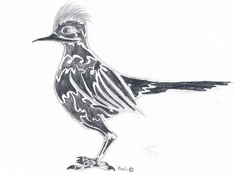 how to draw a roadrunner bird