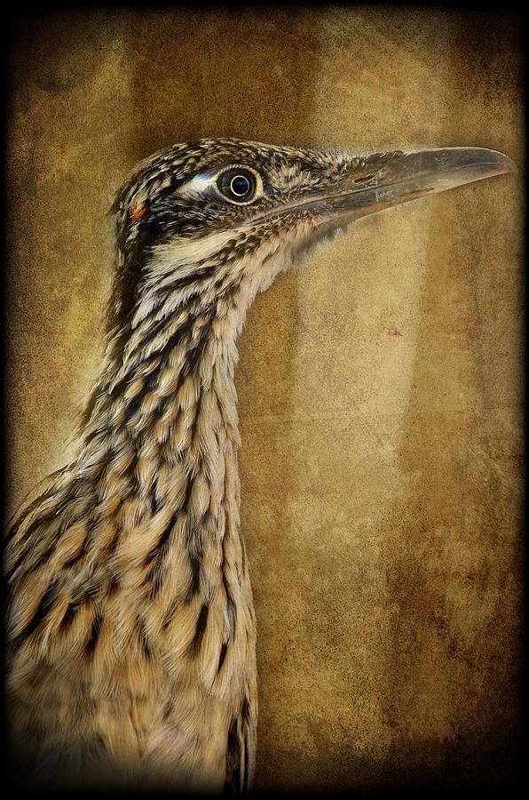 Roadrunner Bird Photograph - The Roadrunner  by Saija  Lehtonen