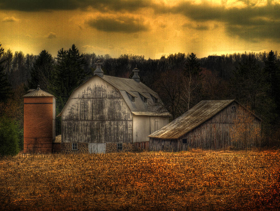 Farm Photograph - The Rose Farm by Thomas Young