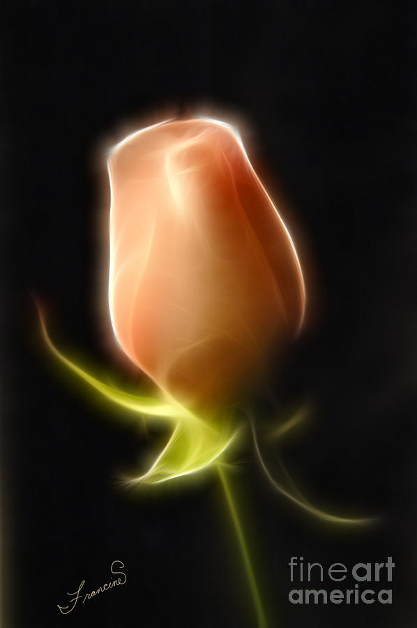 Rose Painting - The Rose by Francine Dufour Jones