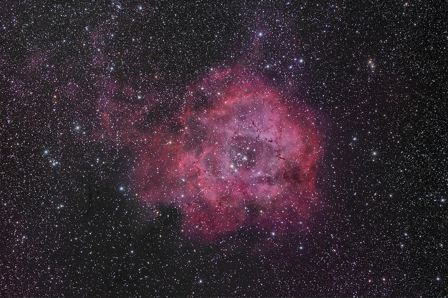 Astronomy Photograph - The Rosette Nebula by Brian Peterson