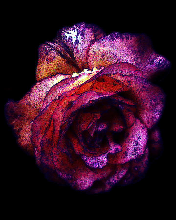Royal Photograph - The Royal Rose by Stephanie Hollingsworth