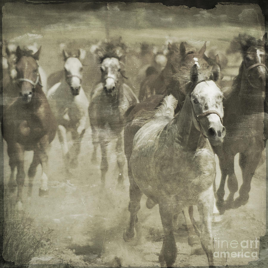 Horse Photograph - The Run For Freedom by Angel  Tarantella