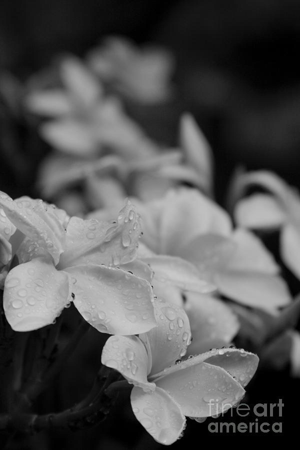Aloha Photograph - The Sacred Garden by Sharon Mau