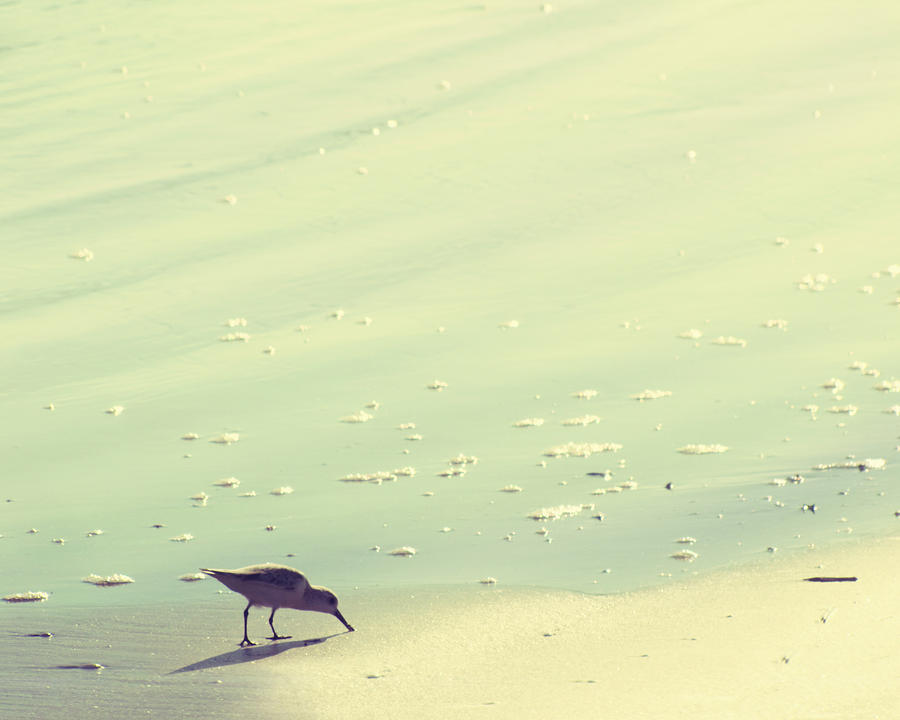 Beach Photograph - The Sandpiper by Amy Tyler