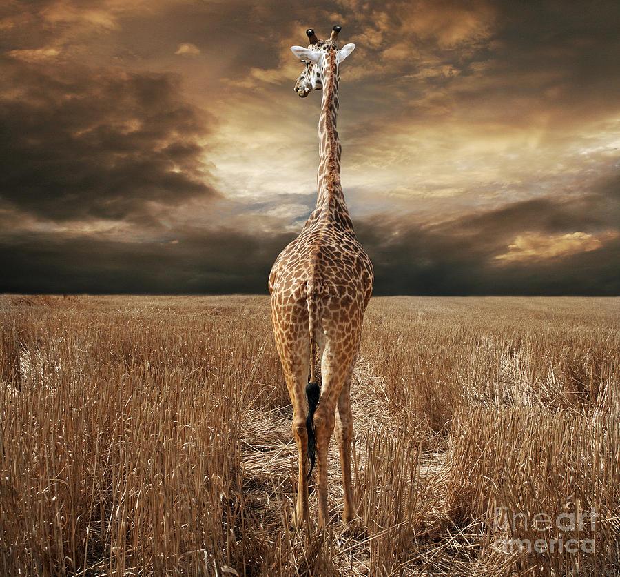 Photograph Photograph - The Savannah by Lynn Jackson