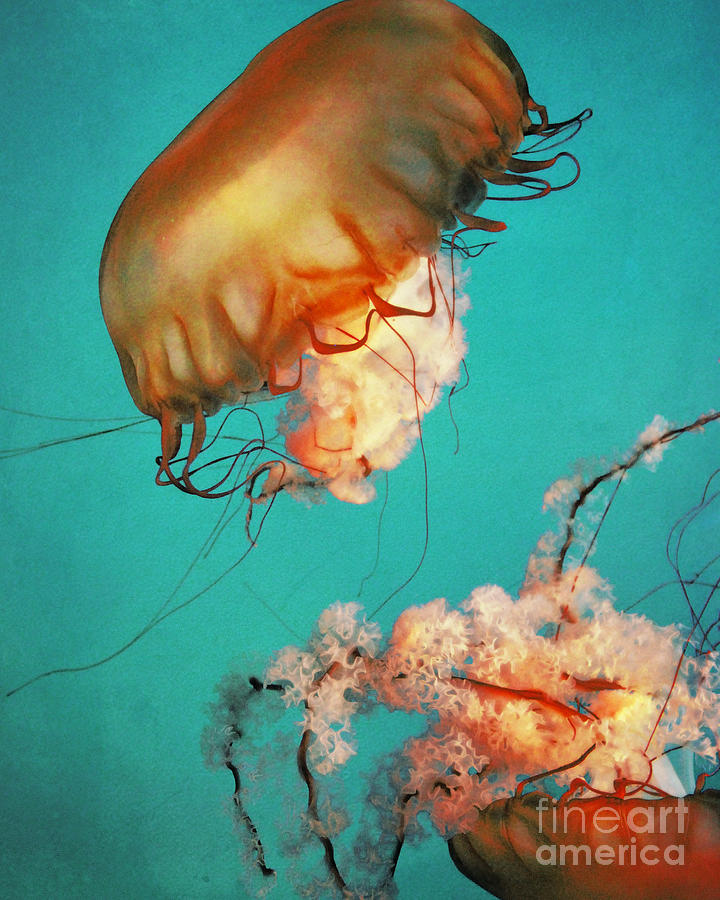 Jellyfish Photograph - The Sea Ballet by Sharon Coty