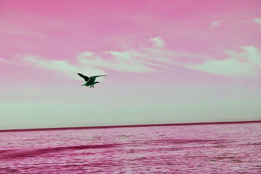 The Seagull And The Crooked Pink Skyline Photograph
