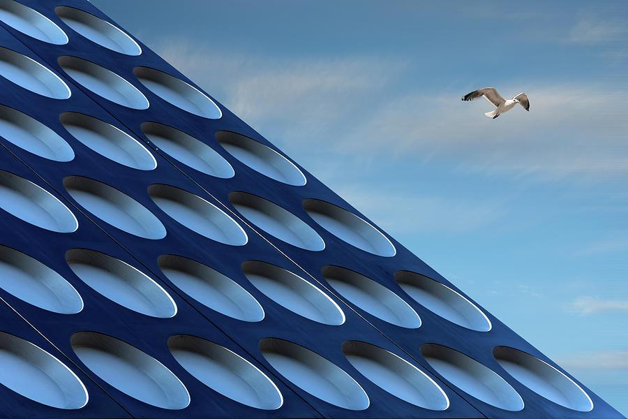 Bird Photograph - The Seagull by Henk Van Maastricht