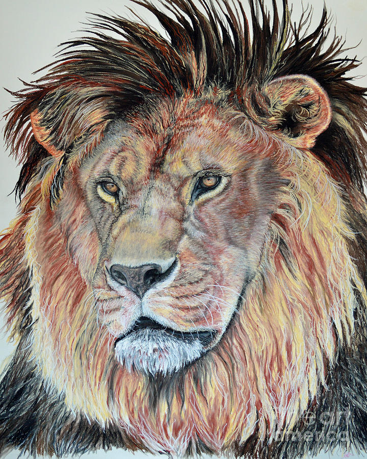 African Lion Pastel - The Sentinel by Ann Marie Chaffin
