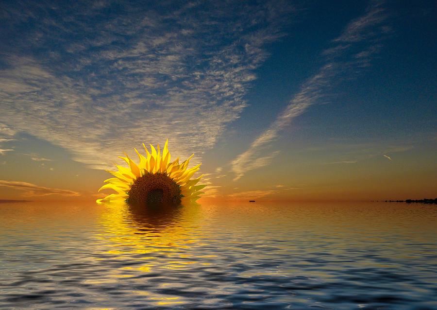 The Setting Sun-Flower by Geraldine Alexander
