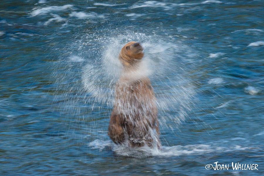 Alaska Photograph - The Shake by Joan Wallner