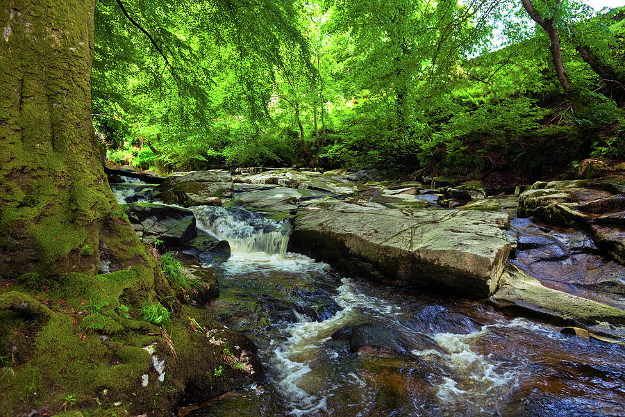Horizontal Photograph - The Shankhill River Shortly by Panoramic Images