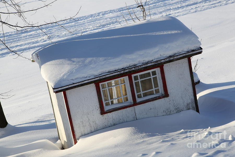 Shed Photograph - The Shed by Sophie Vigneault