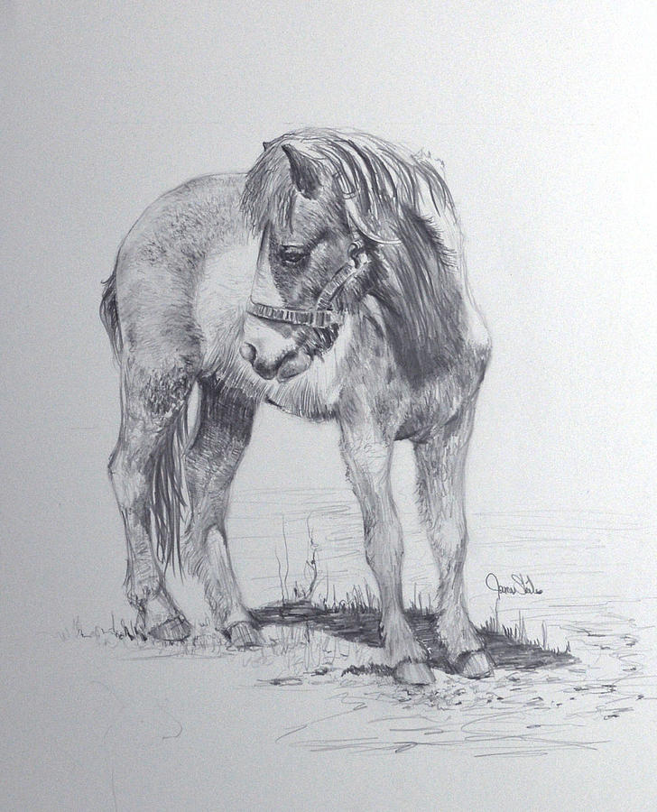 Horse Drawing Drawing - The Shetland by James Skiles