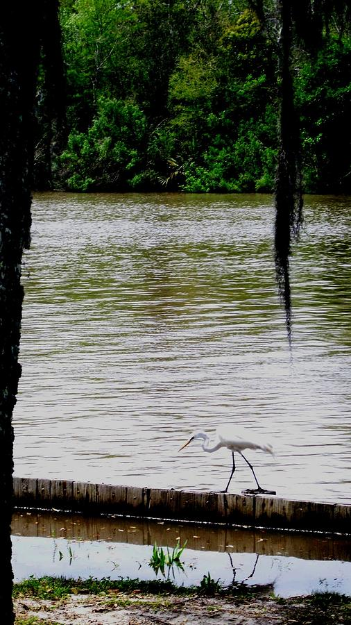 River Side Photograph - The Single Flyer by Robin Lewis