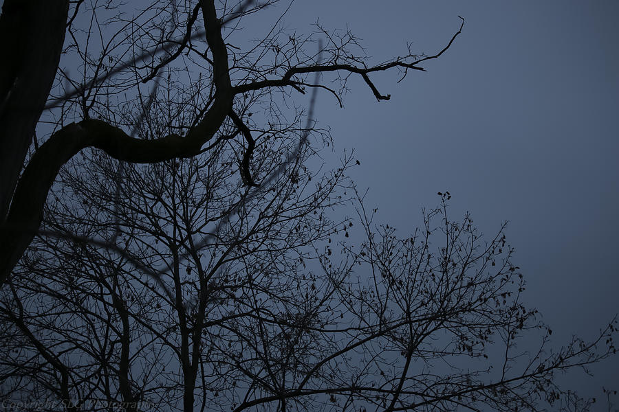 Trees Photograph - The Snake by Stacie  Goodloe