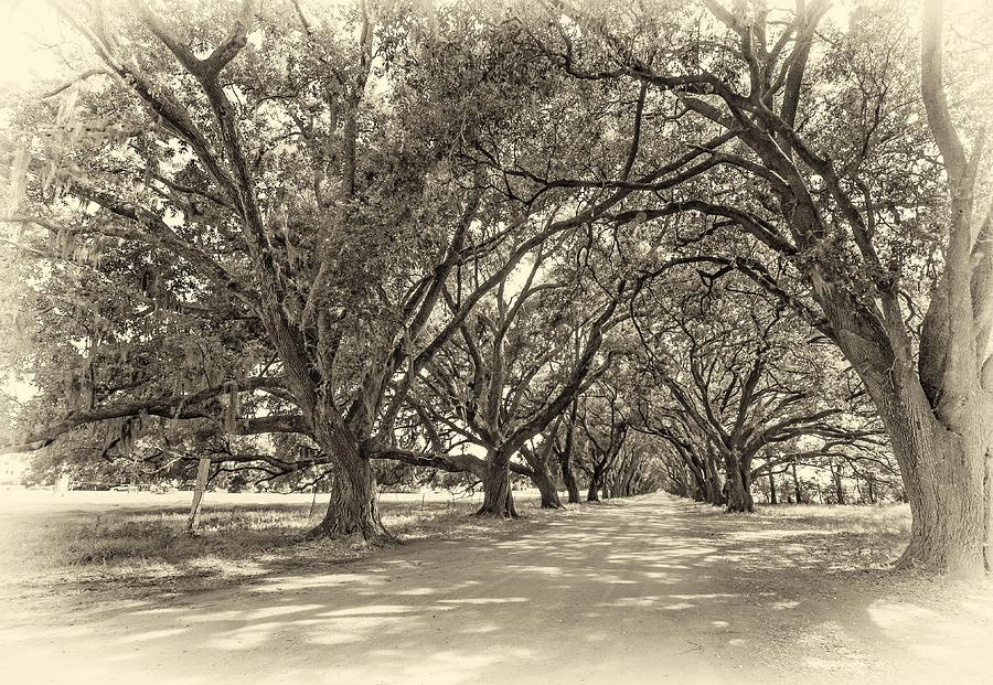 Evergreen Plantation Photograph - The Southern Way Sepia by Steve Harrington