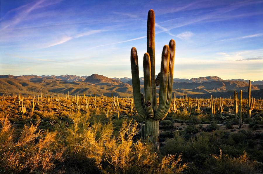Arizona Photograph - The Southwest Golden Hour  by Saija  Lehtonen