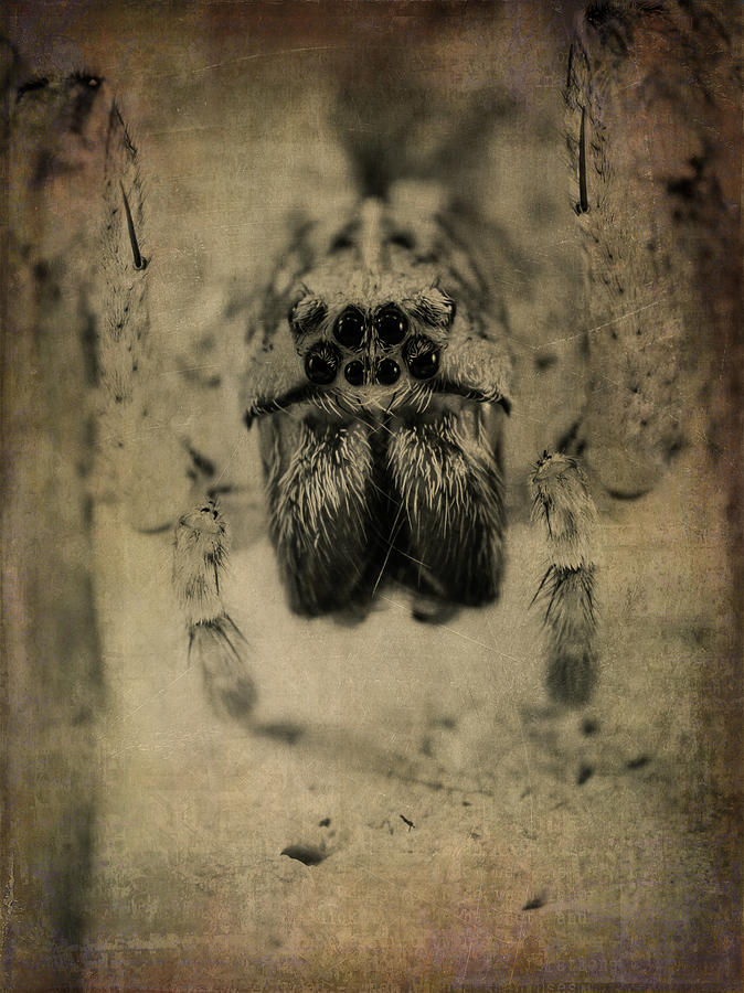 Spider Photograph - The Spider Series Xiii by Marco Oliveira
