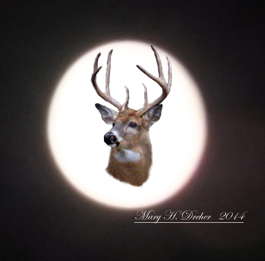 Whitetail Digital Art - The Spirit Of Goldie by Mary Dreher