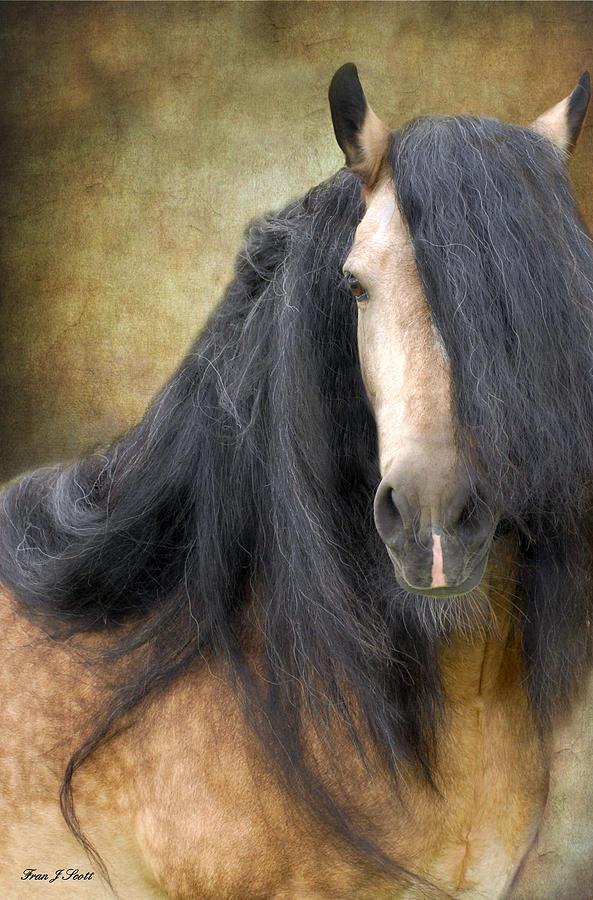 Stallion Photograph - The Stallion by Fran J Scott