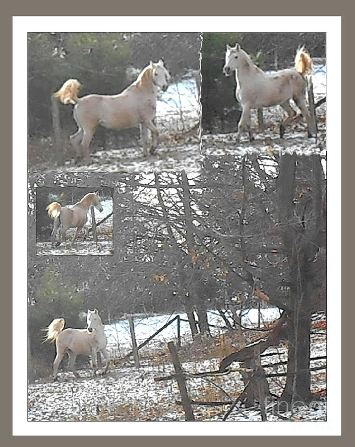 Paso Fino Photograph - The Stallion Lives In The Country by Patricia Keller