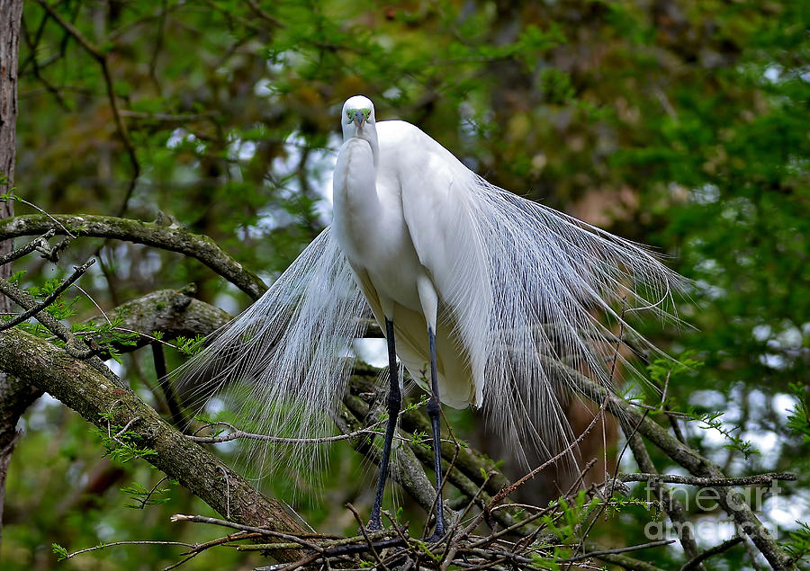 Egret Photograph - The Stare Down by Kathy Baccari