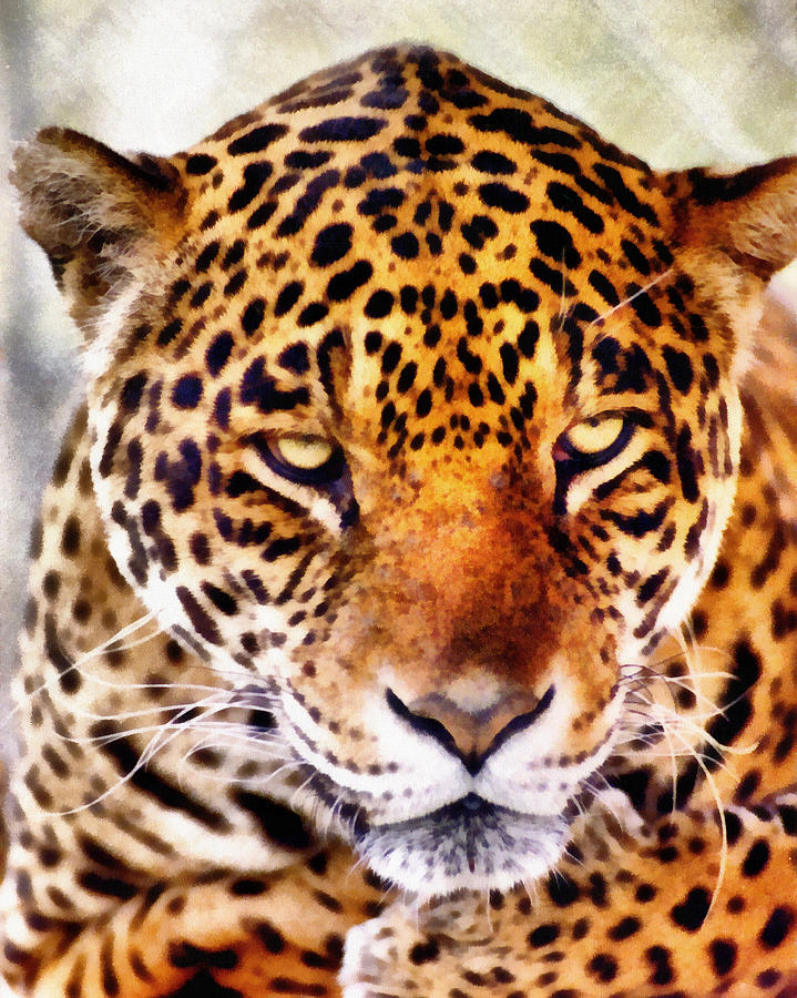 Leopard Photograph - The Stare by Lester Phipps