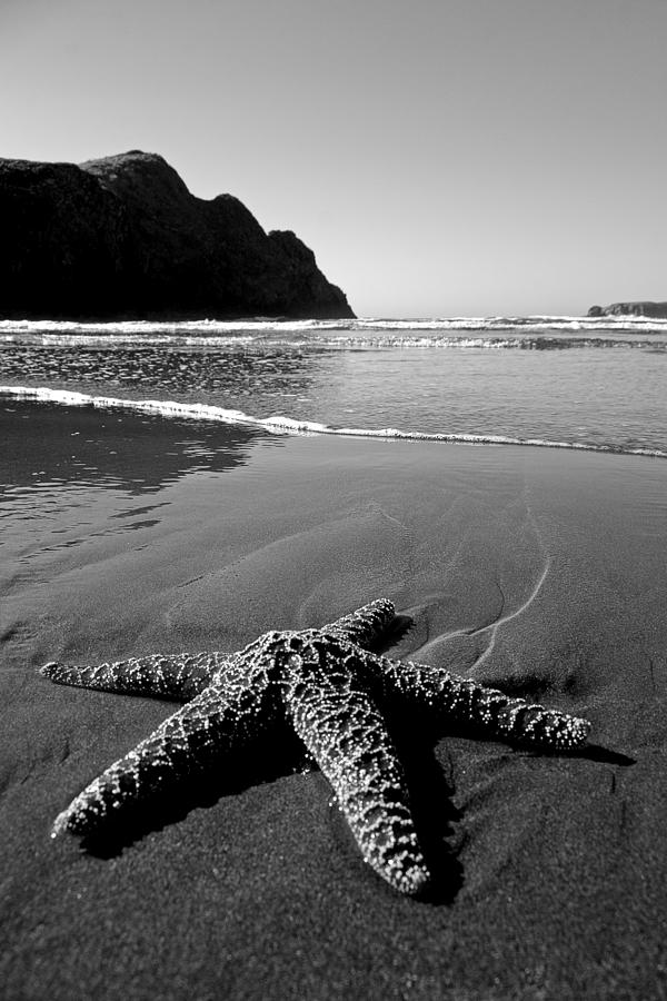 The Starfish Photograph