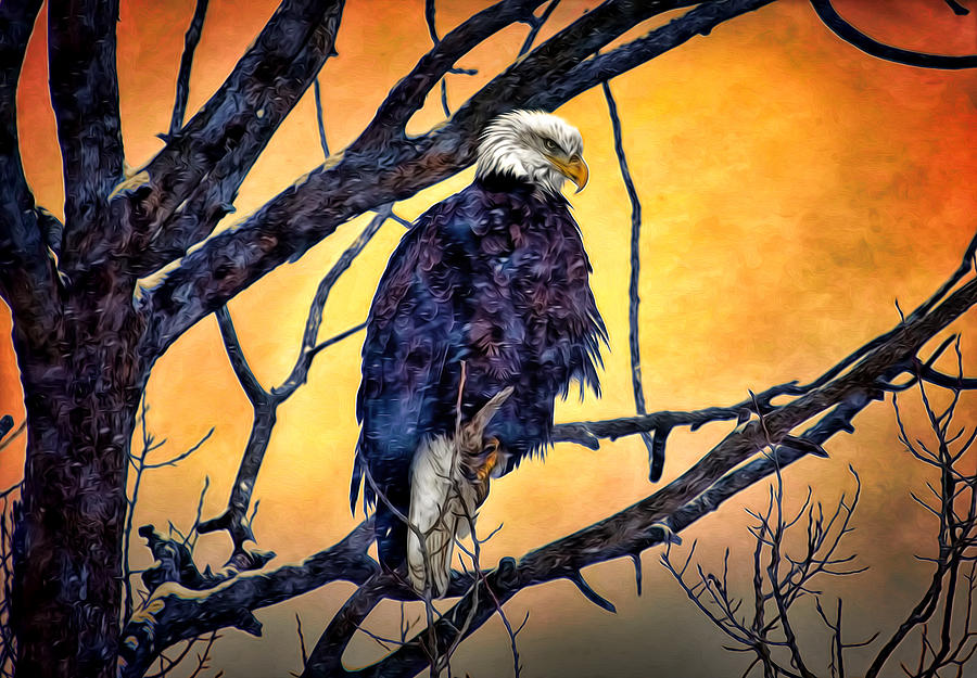 American Bald Eagle Photograph - The Staring Eagle by Gary Smith
