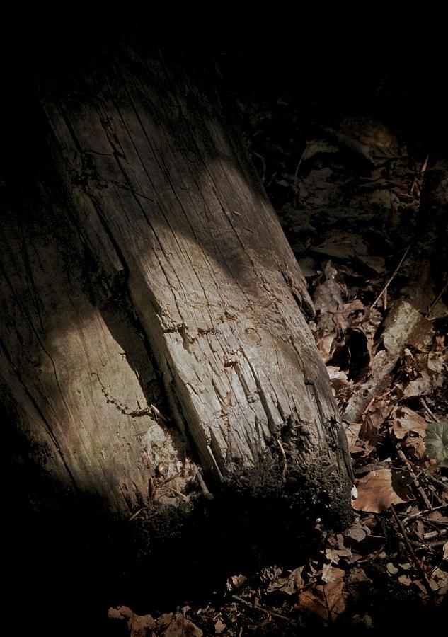 Still Of The Light Photograph - The Still Of The Light by Odd Jeppesen