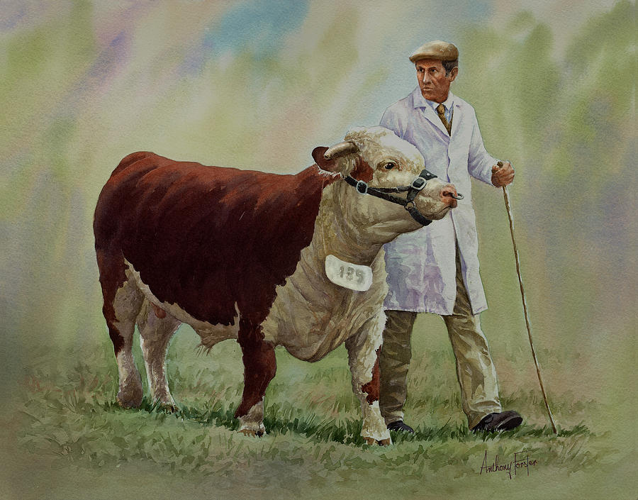 Bull Painting - The Stockman And Bull by Anthony Forster