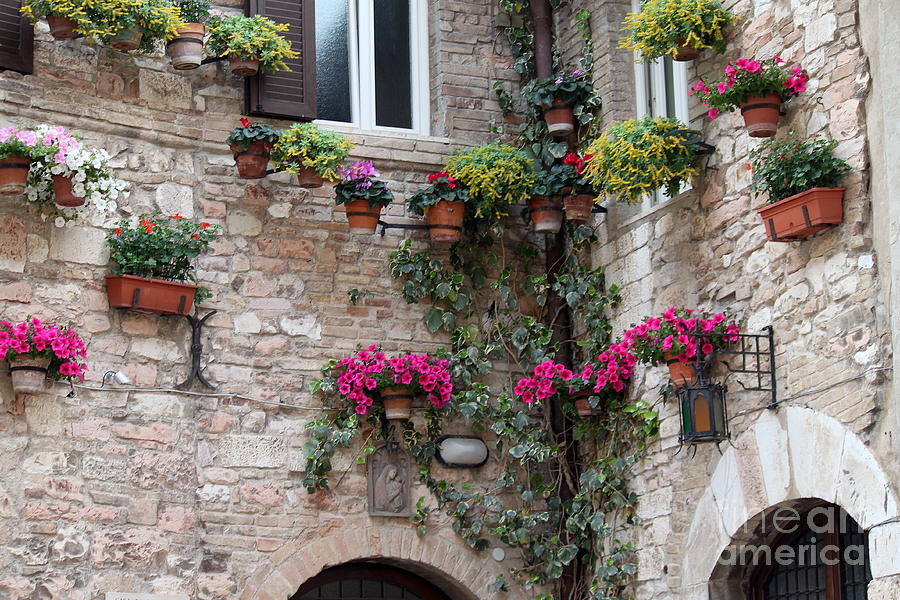 Flower Photograph - The Streets Of Assisi 2 by Theresa Ramos-DuVon