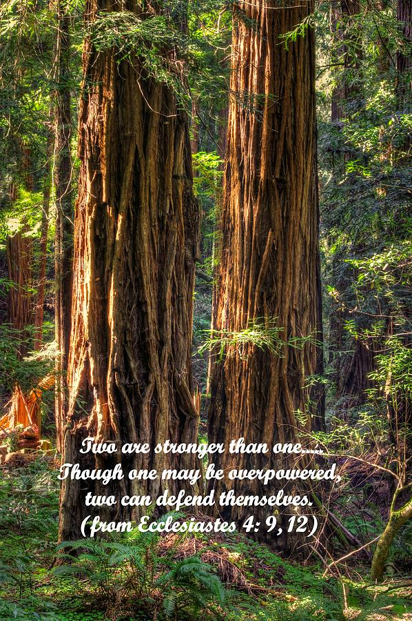 California Photograph - The Strength Of Two - From Ecclesiastes 4.9 And 4.12 - Muir Woods National Monument by Michael Mazaika