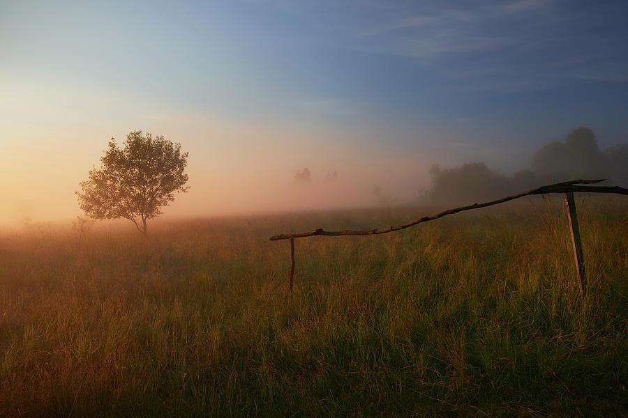 Landscape Photograph - The Summer Field by Krzysztof Mierzejewski
