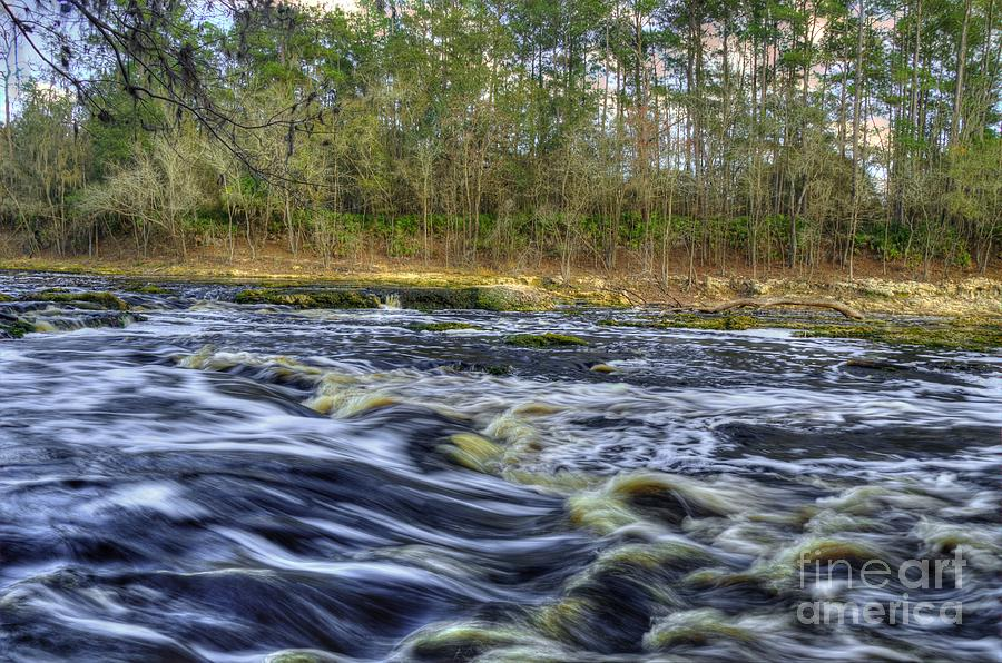 River Photograph - The Survivor by Mark Nelson
