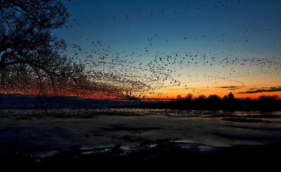 Matt Molloy Photograph - The Swarm by Matt Molloy