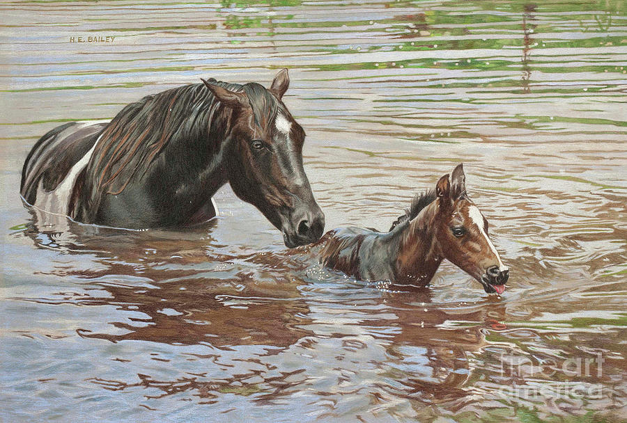 Mare And Foal Drawing - The Swimming Lesson by Helen Bailey